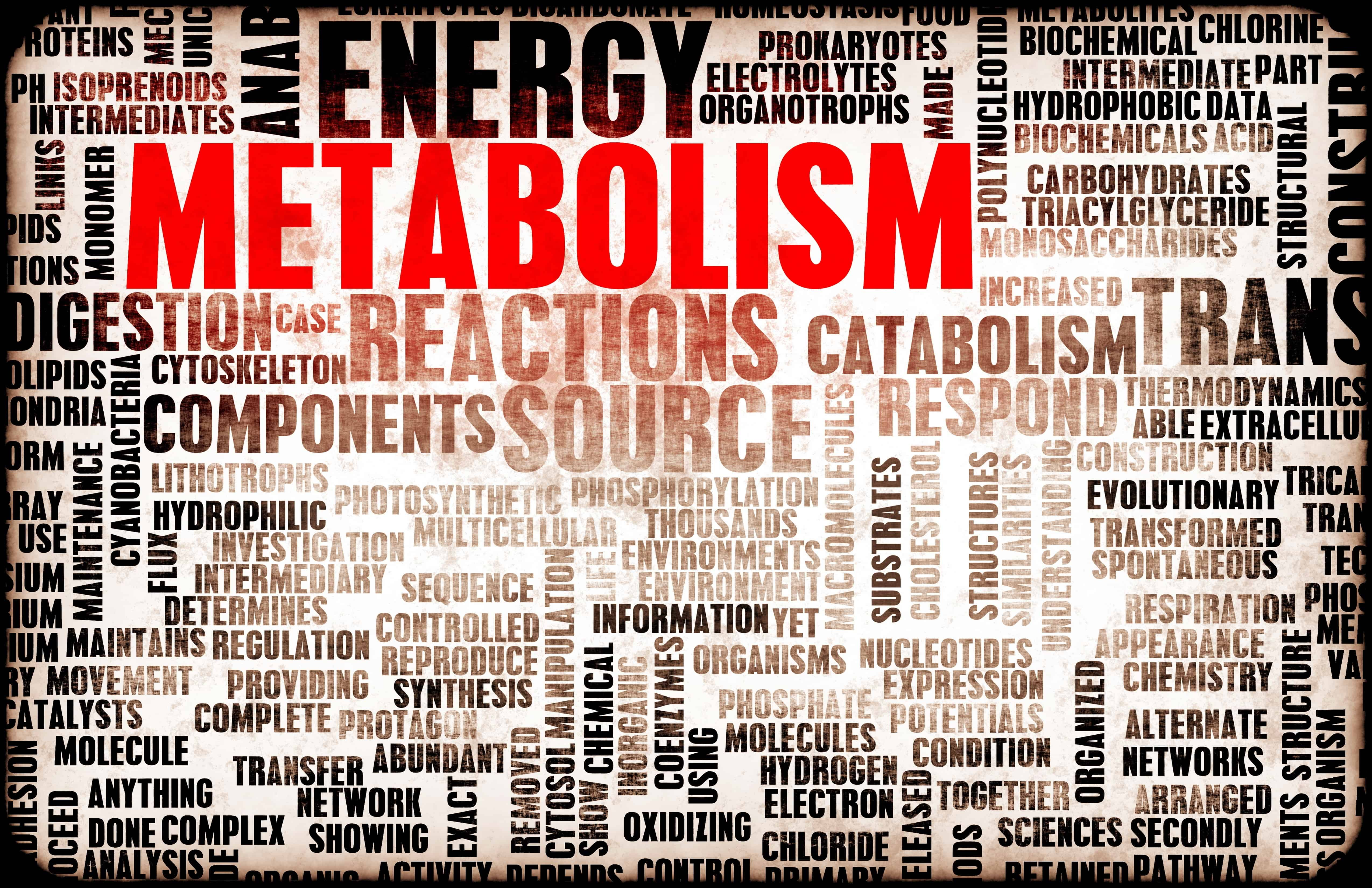Four Common Mistakes That Slow Your Metabolism