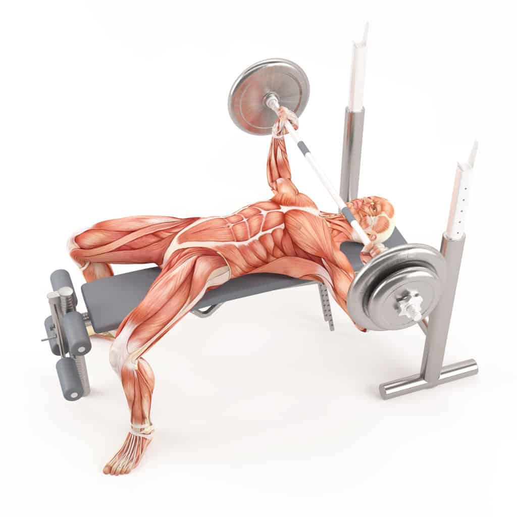 the best compound exercises:Barbell Bench Press