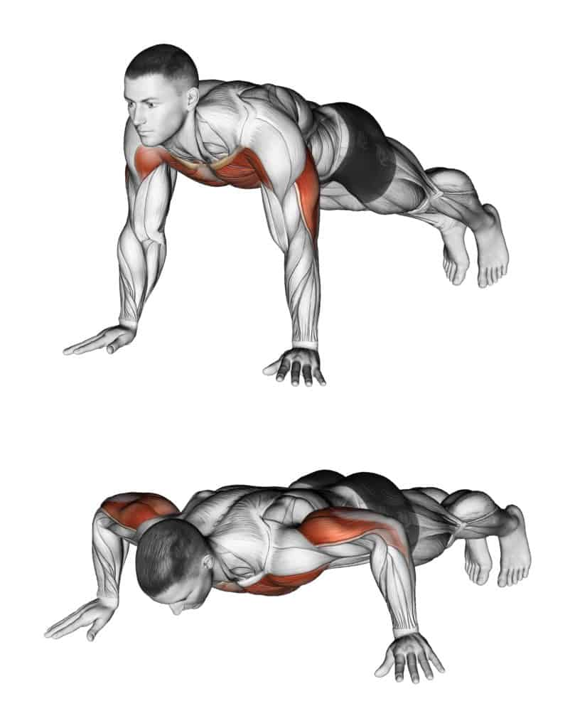 List of Compound exercises:pushups