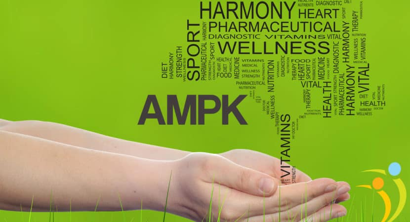 What Is AMPK And What Does It Do?