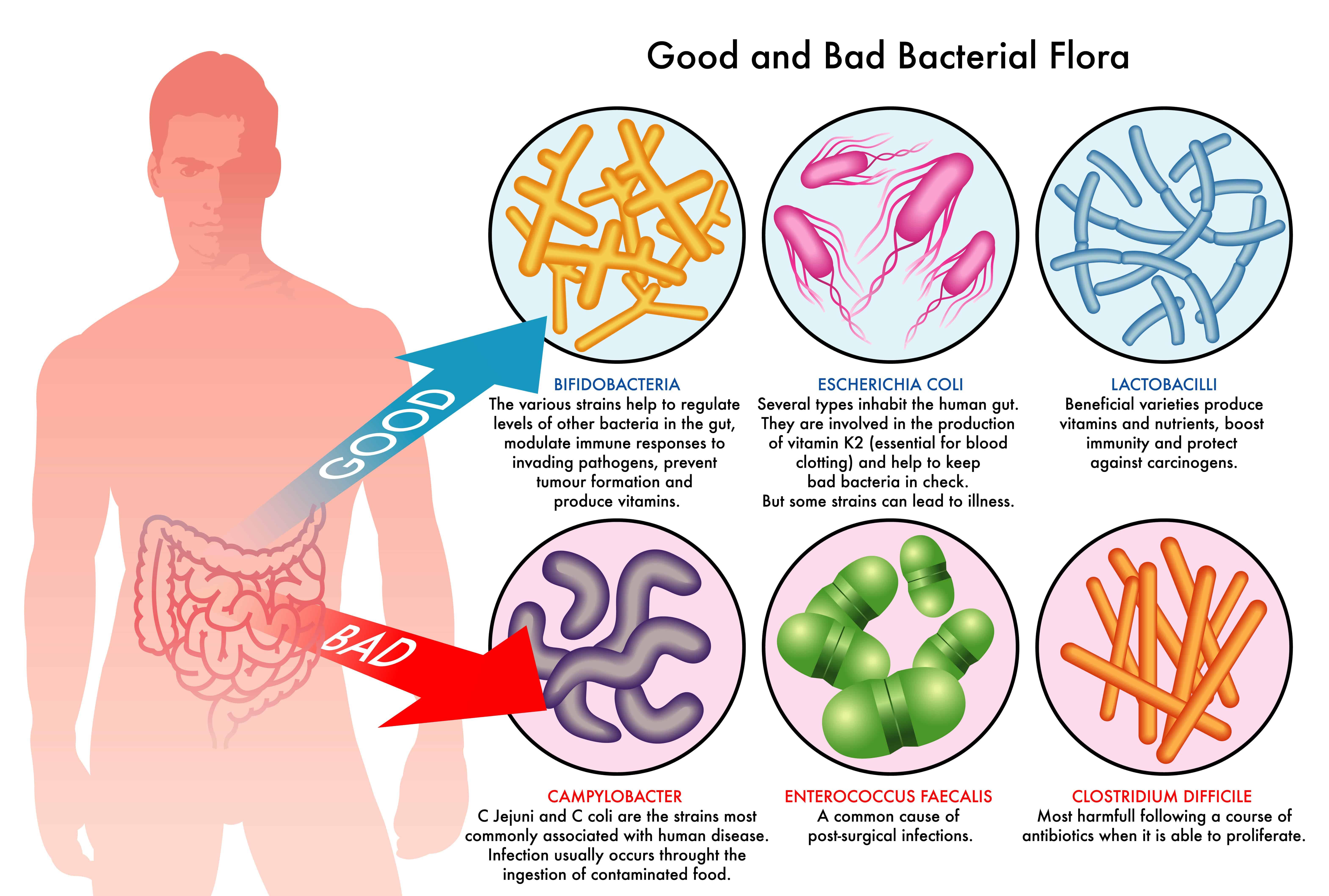 6 Health Benefits Of Using Probiotic Supplements