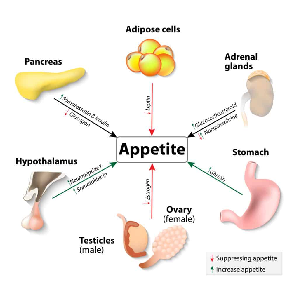 appetite suppressants that work.