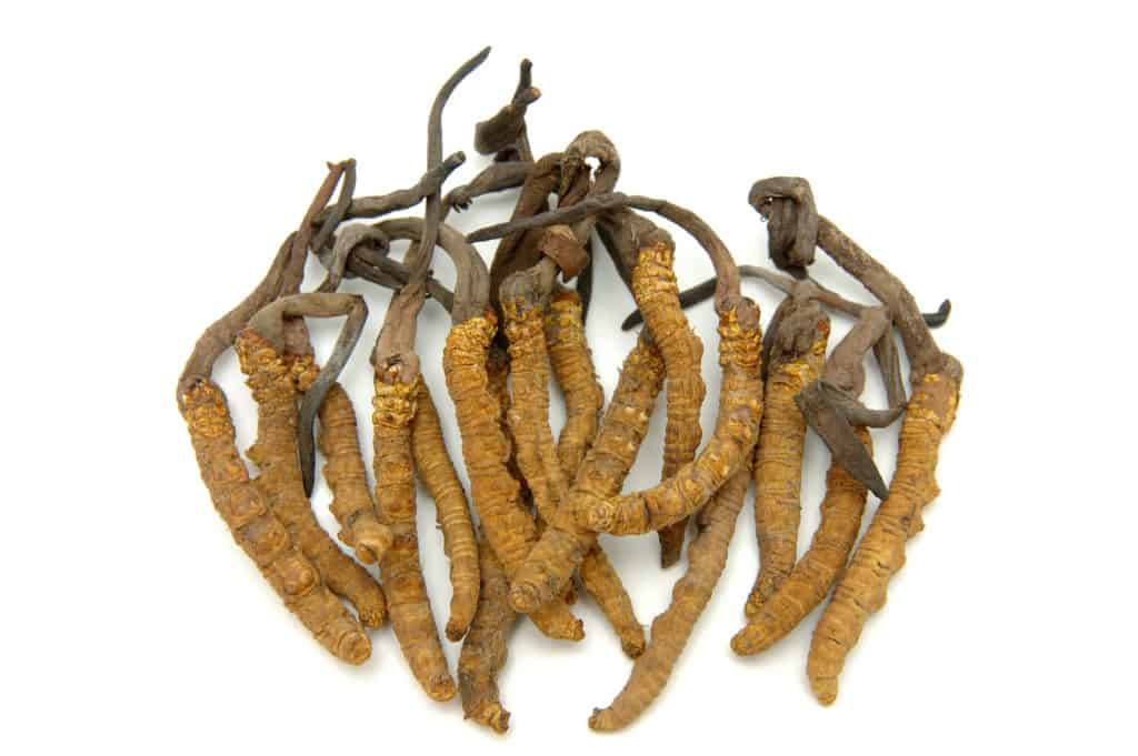The best Adaptogenic herbs:Cordyceps