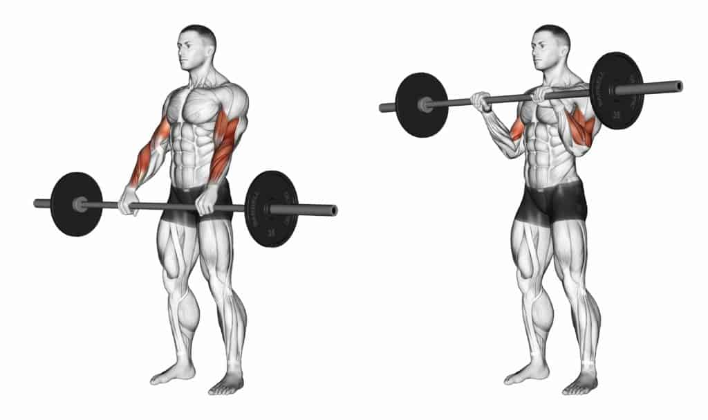 compound vs isolation exercises:Reverse Barbell Curls