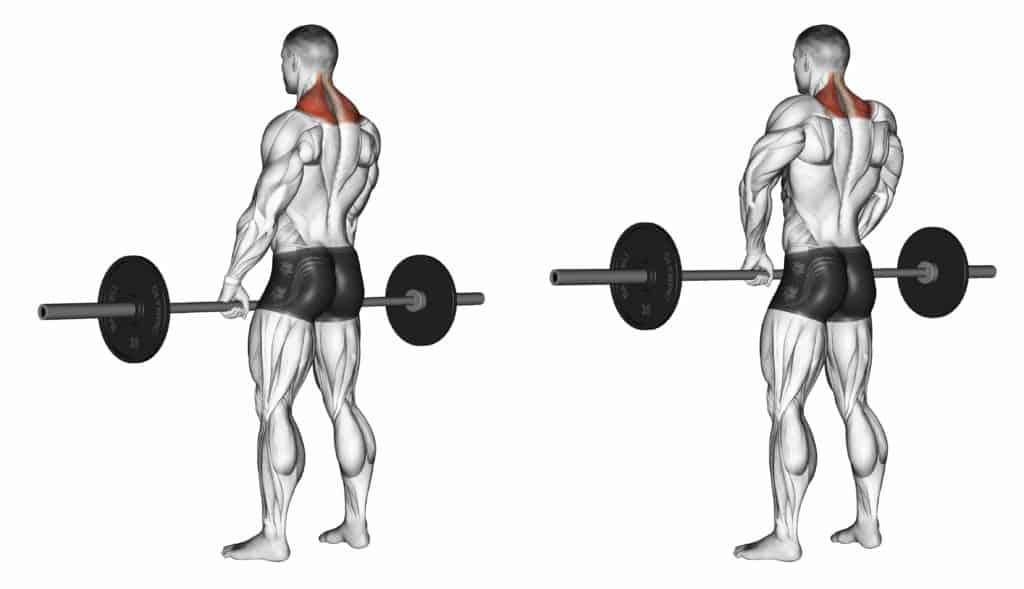 compound vs isolation exercises:Shrugs