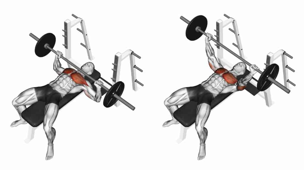 compound vs isolation exercises:Bench Press
