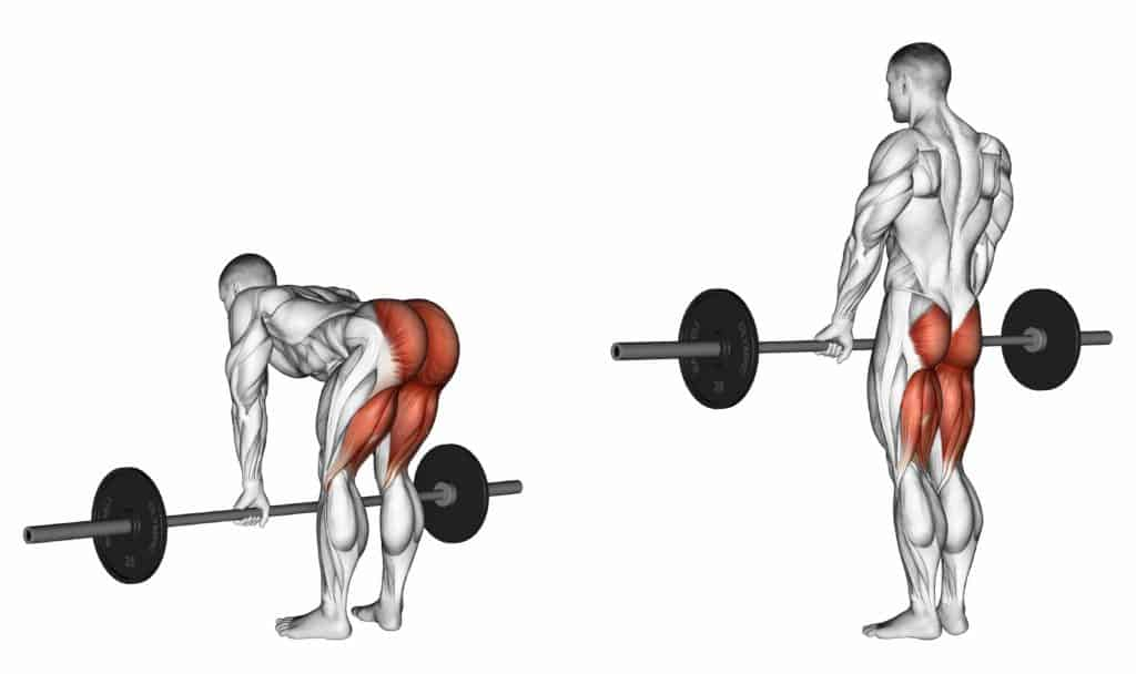 compound vs isolation exercises:Deadlifts