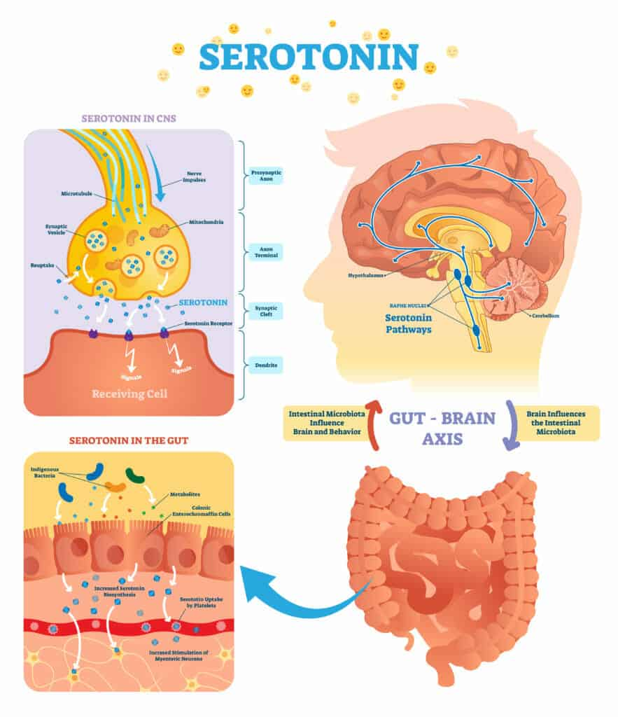 weight loss mindset:Eat Foods That Boost Serotonin Levels in The Body